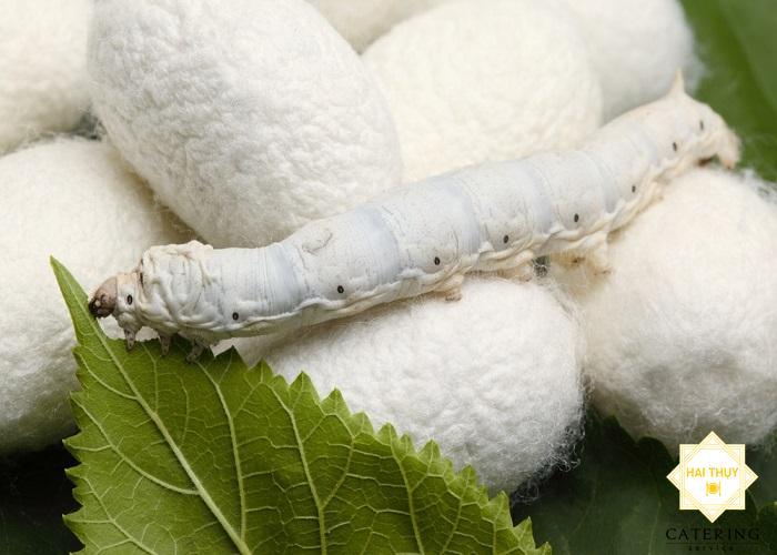 Công dụng của tằm cho sức khỏe người tiểu đường